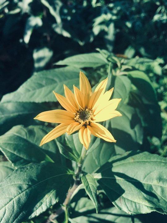Plant, Nature, Yellow, Flower, Blossom, Bloom, Garden