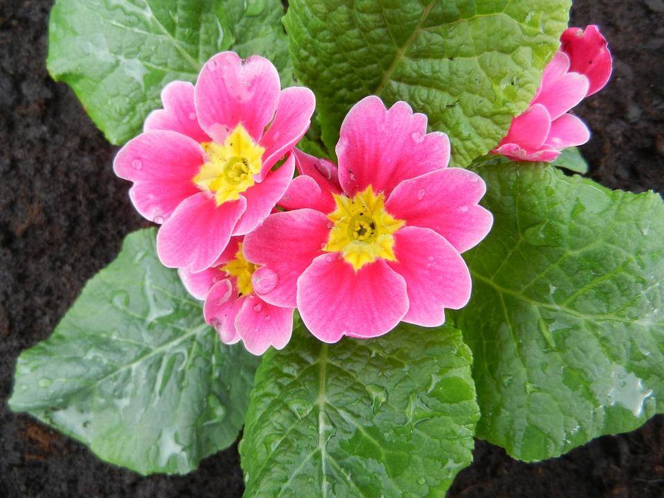 Flower, Spring, Garden, Plant