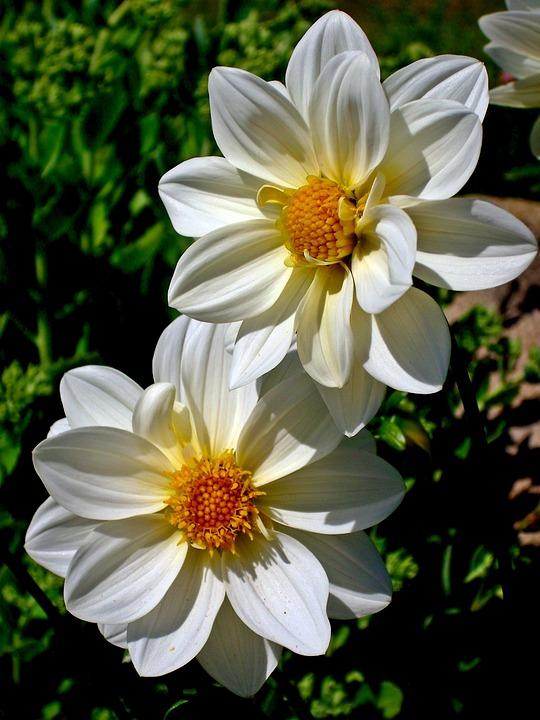Nature, Flower, Plant, Summer, Garden