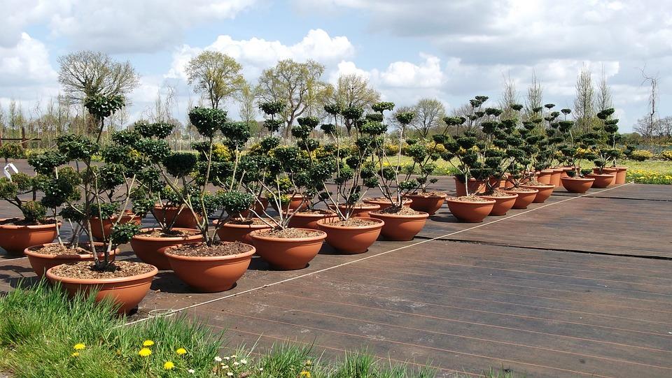 Garden, Plant, Flowers, Pots, Trees Growing