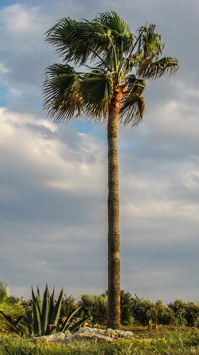 Palm, Plant, Nature, Green, Garden, Cyprus