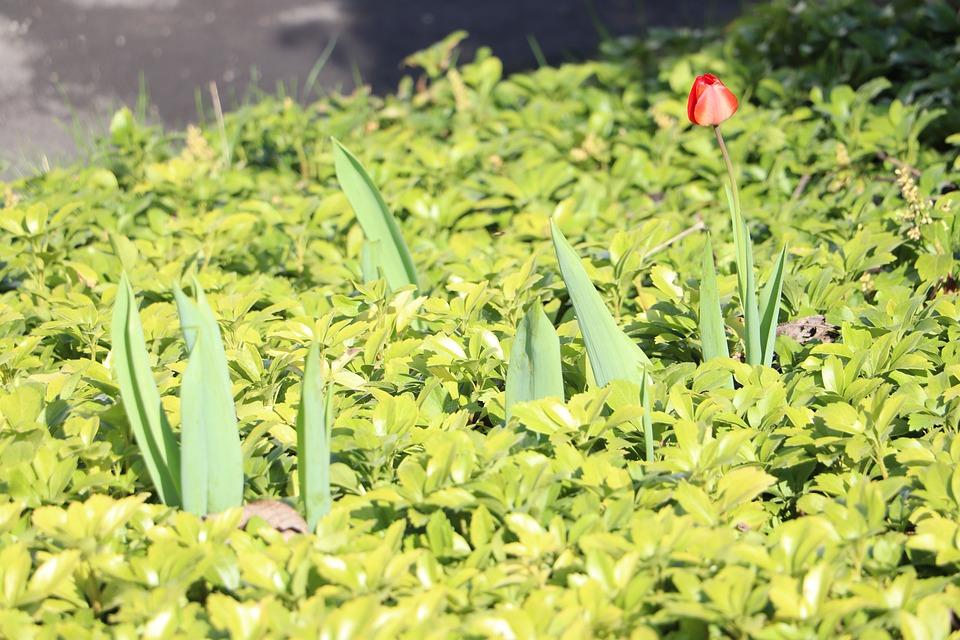 Plant, Nature, Leaf, Garden