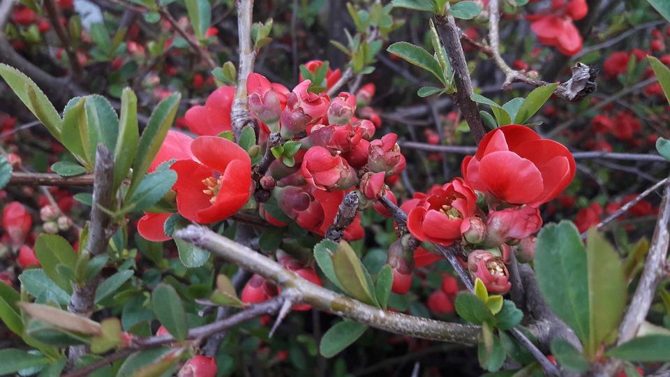 Nature, Plant, Flower, Leaf Plants, Garden, Branch