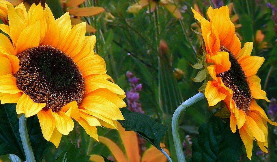 Flower, Plant, Nature, Garden, Summer, Petal, Close