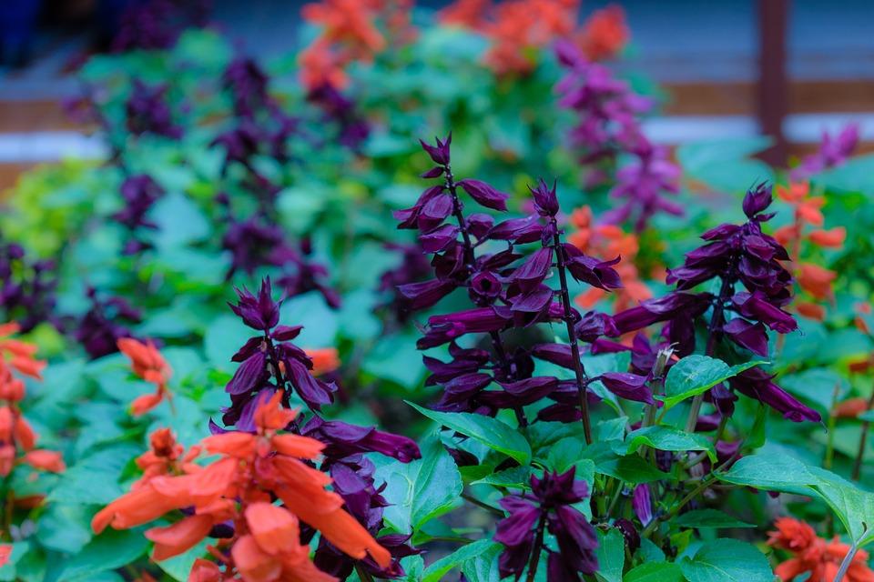 Flower, Garden, Nature, Spring, Plant, Red