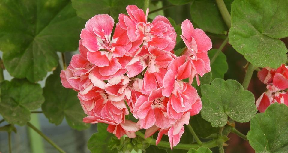 Nature, Plant, Flower, Garden, Summer