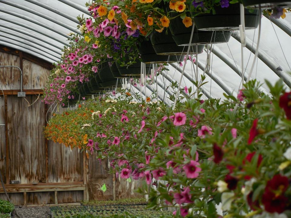 Flower, Annual, Plant, Green, Summer, Garden, Spring
