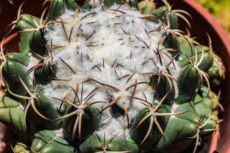 Cactus, Thorns, Plant, Nature, Garden, Flora, Exotic