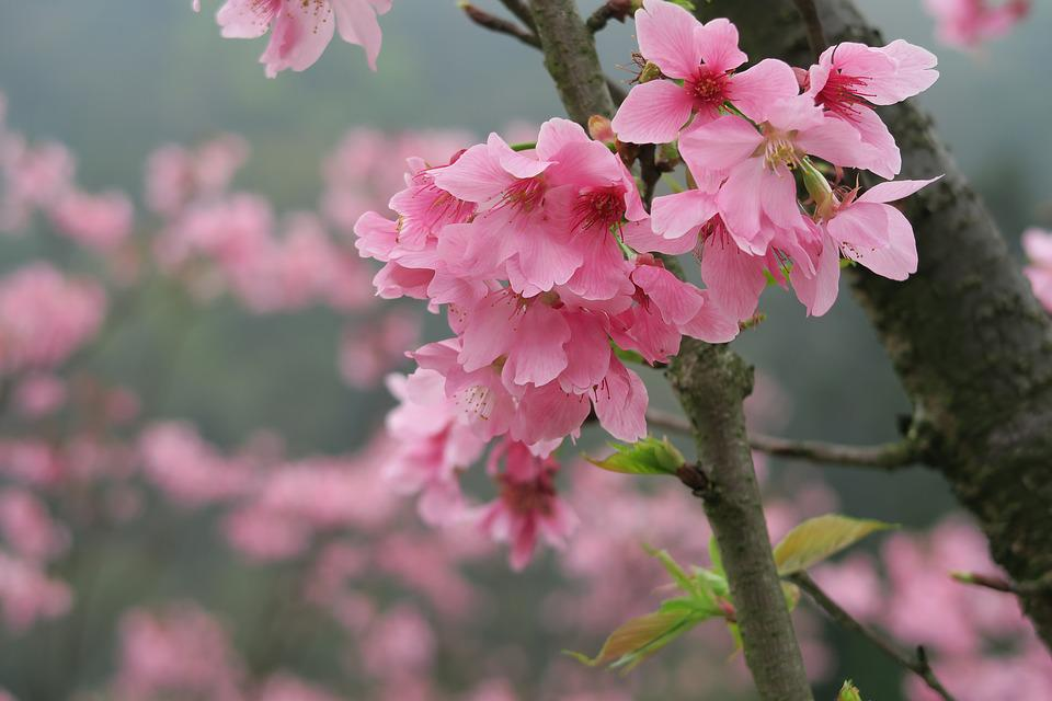 Flower, Plant, Nature, Garden, Tree