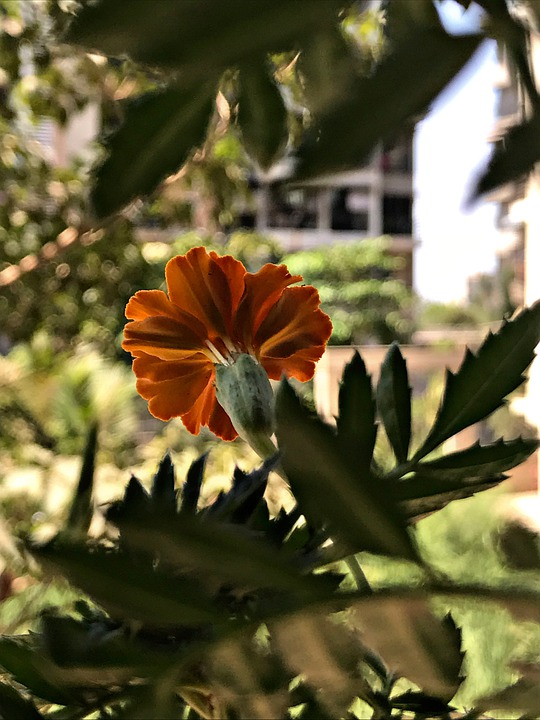 Flower, Branch, Plant, Tree, Gardening, Nature, Floral