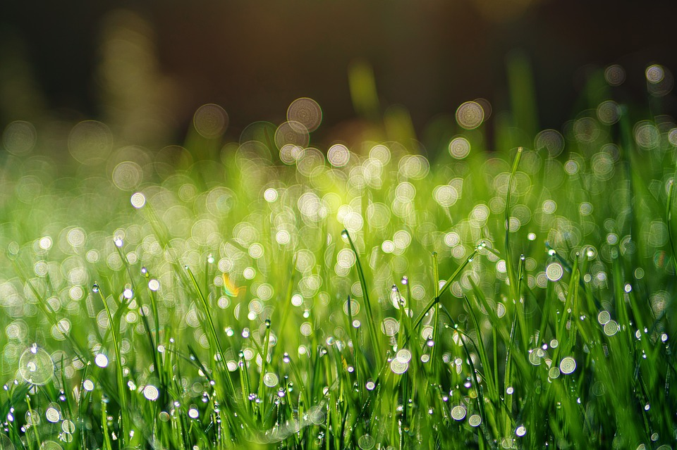 Grass, Meadow, Dew, Pearl, Bokeh, Plant, Background