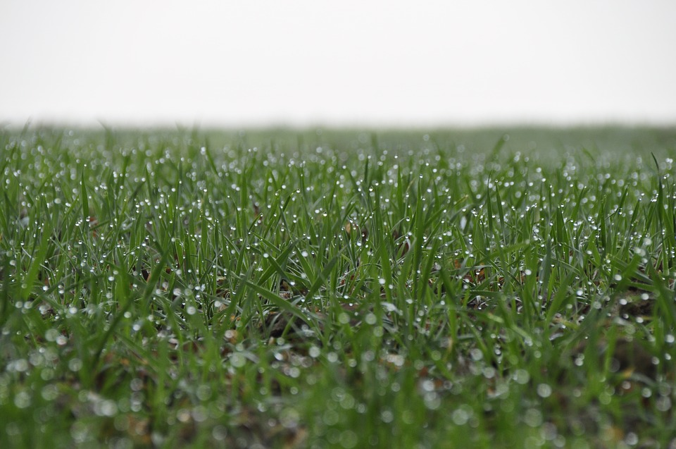 Grass, Dewdrop, Green, Nature, Field, Grasses, Plant