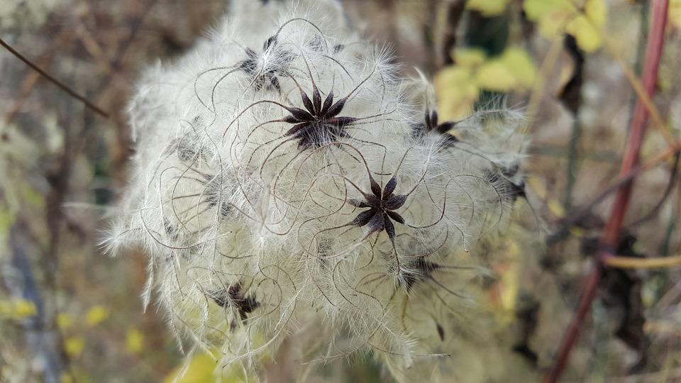 Nature, Plant, Flower, Fluffy, Growth, Summer, Grass