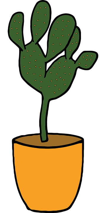 Cactus, Plant, Green