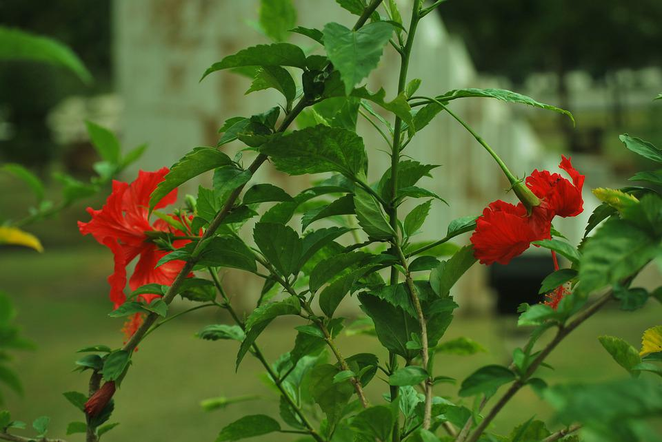 Green, Red, Garden, Flowers, Photo, Plant, Natural