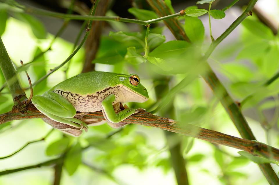 Natural, In The Early Summer, Plant, Green, Leaf, Frog