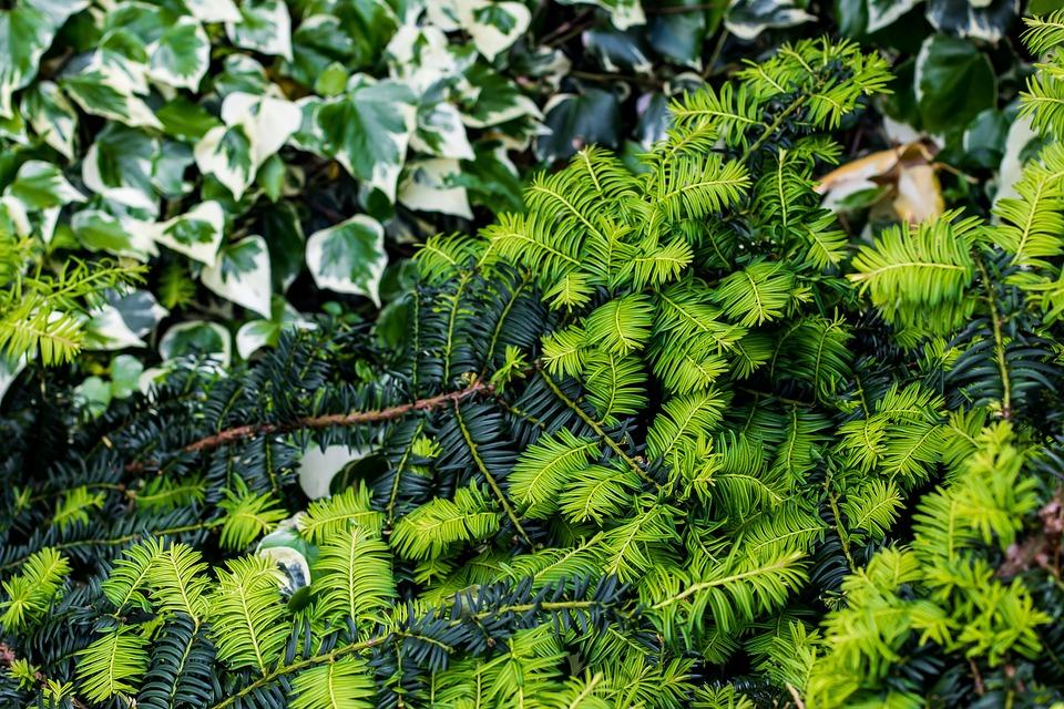 bush green nature plant garden leaf summer - Bush Garden