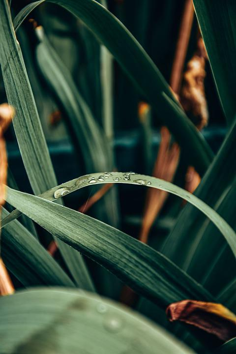 Leaves, Plant, Dew, Dewdrops, Wet, Foliage, Green