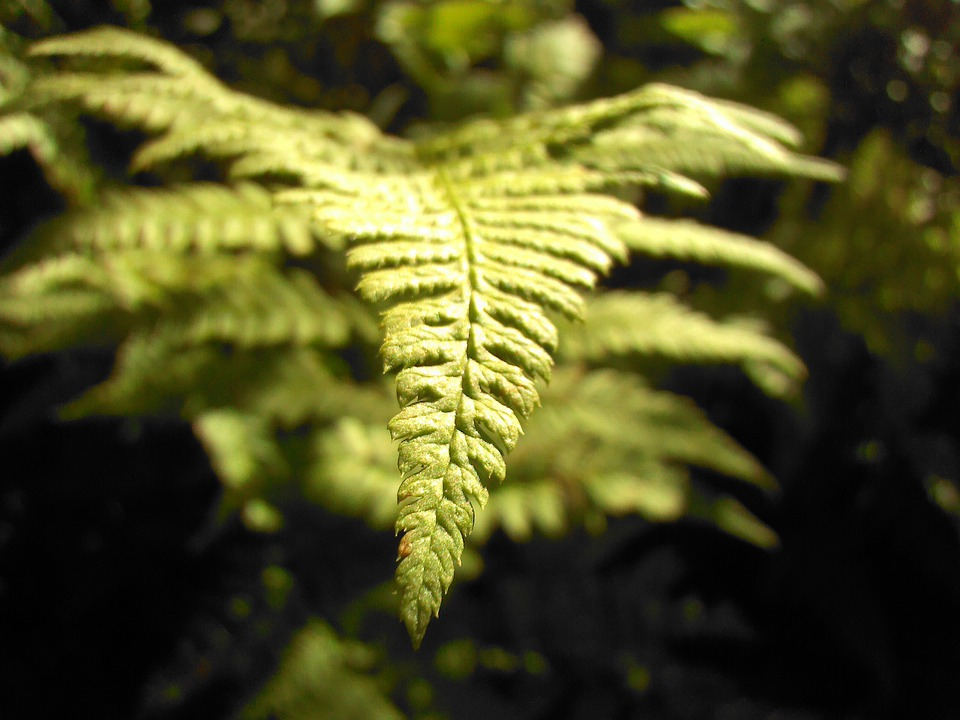 Fern, Green, Macro, Forest, Greens, Plant