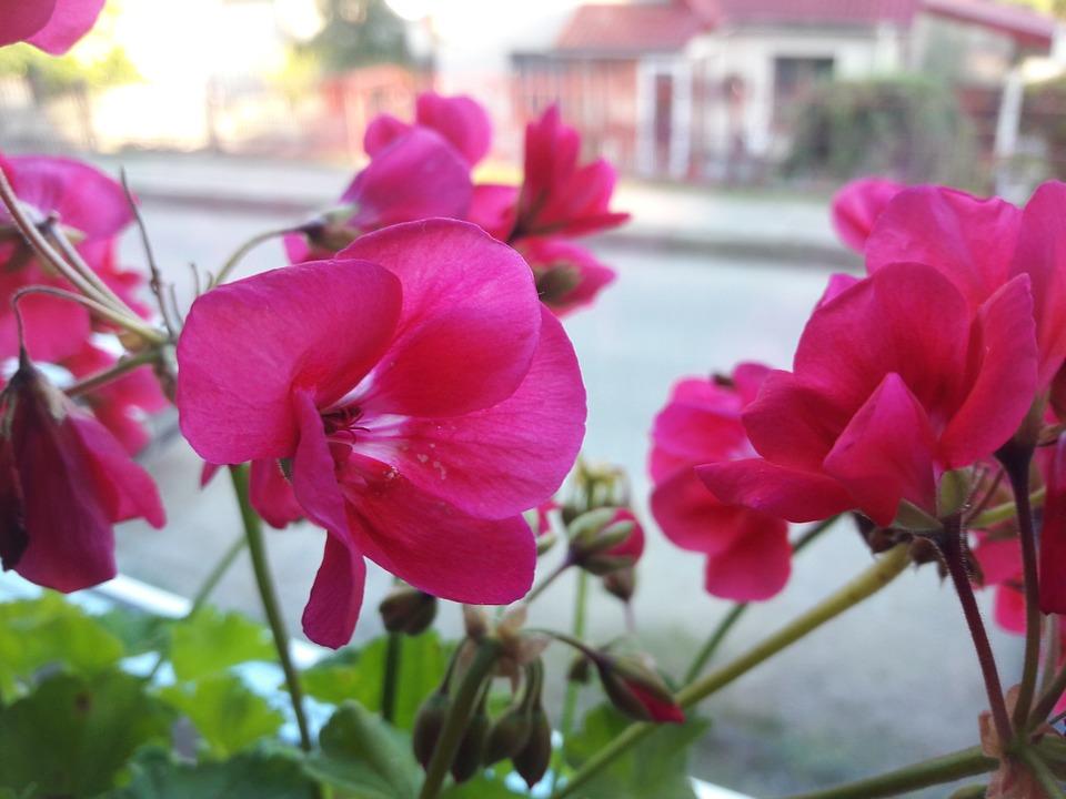 Flower, Natural, Plant, Summer, Green, Season, Color