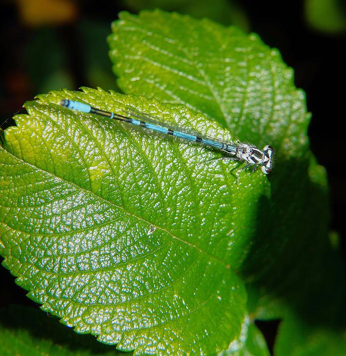 Dragonfly, Leaf, Macro, Plant, Green, Nature, Close