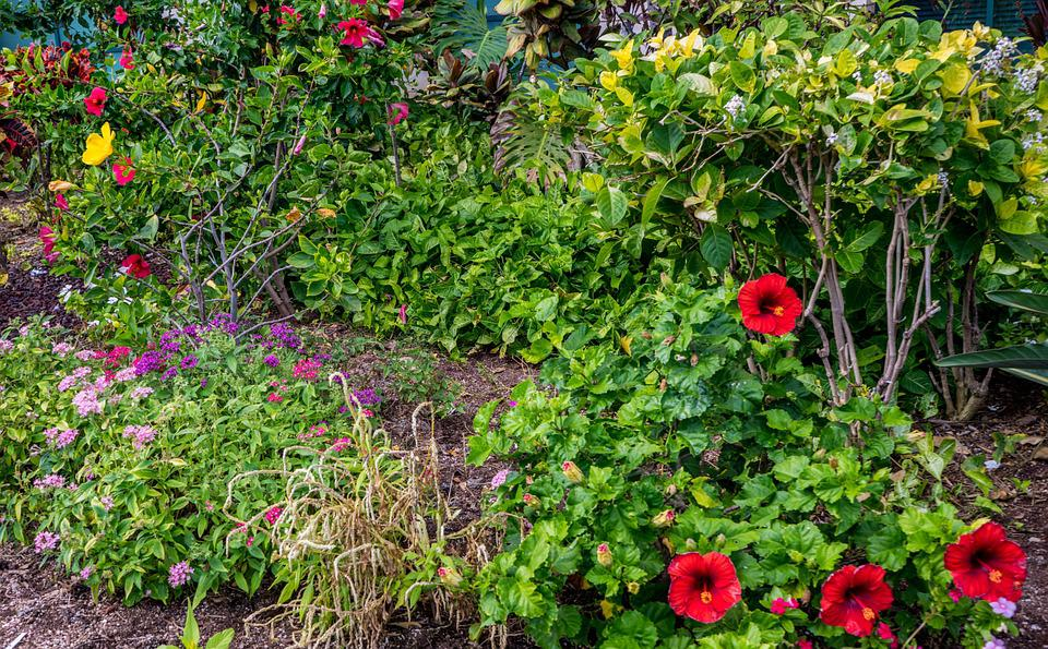 Garden, Hibiscus, Flowers, Green, Nature, Red, Plant