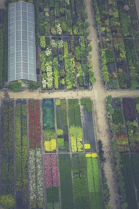 Nursery, Garden, Plant, Nature, Summer, Green, Blossom