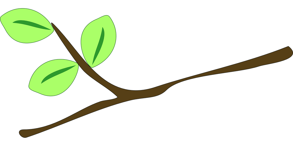 Branch, Leaves, Twig, Plant, Grow, Nature, Ecology, Bio