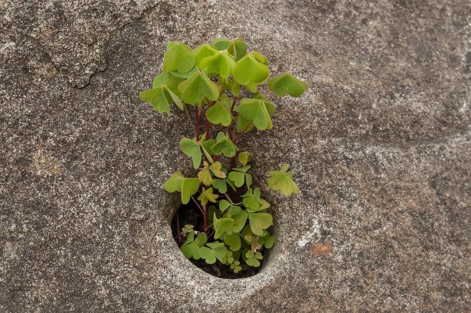 Grow, Stone, Green, Live, Inhospitable, Plant