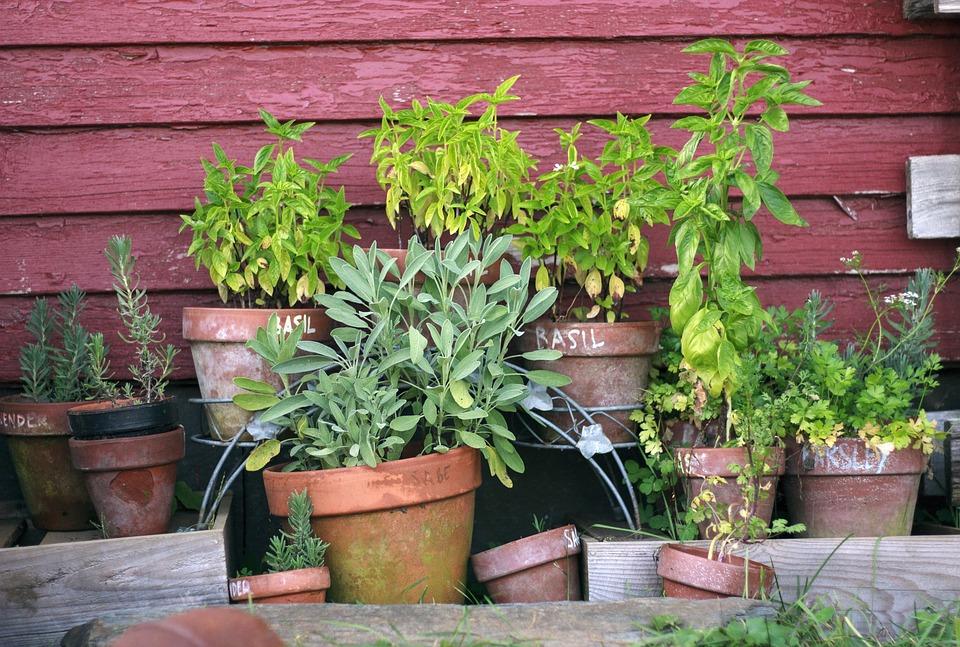 Herb Garden Pots Free photo plant herb garden pots garden green gardening max pixel herb garden pots garden gardening plant green workwithnaturefo