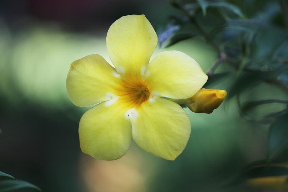 Free photo plant india flower nature yellow yellow flowers max pixel flower yellow nature plant india yellow flowers mightylinksfo