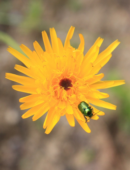 Flower, Bug, Insect, Summer, Plant, Animal, Natural