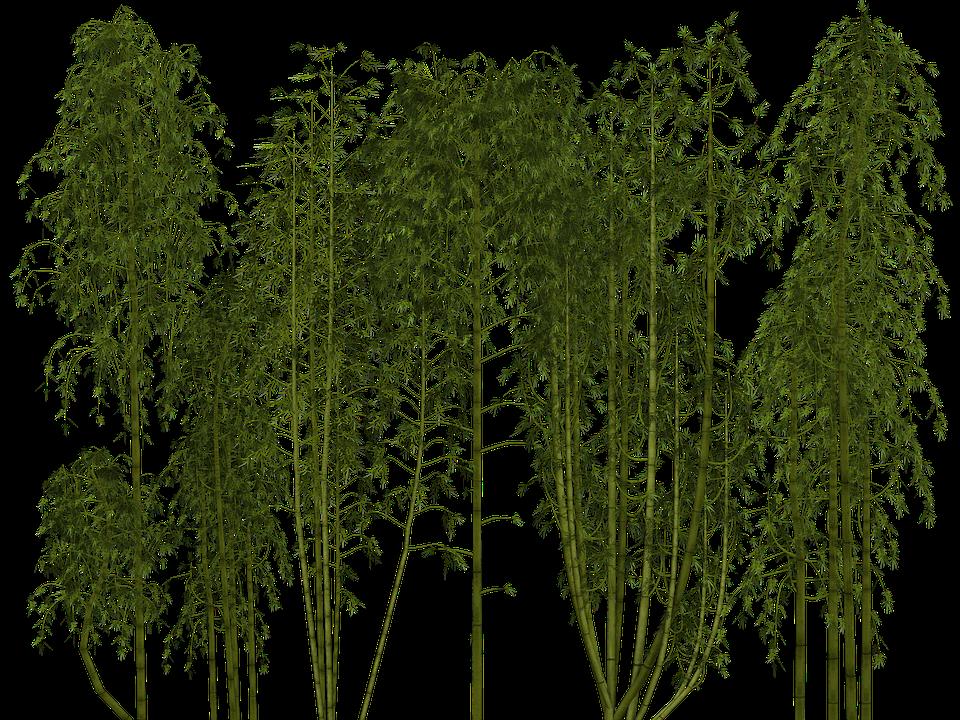 Bamboo, Plant, Wellness, Digital Art, Isolated