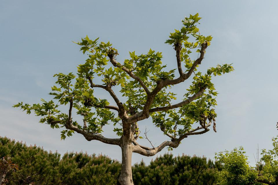 Isolated Tree, Green, Tree, Isolated, Nature, Plant