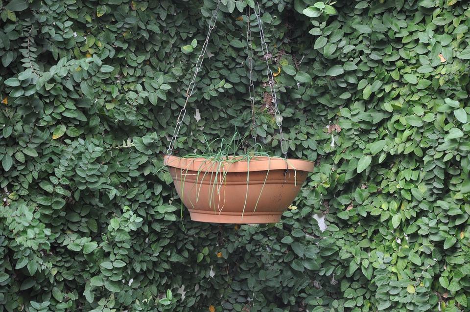 Ivy, Leaf, Plant, Garden