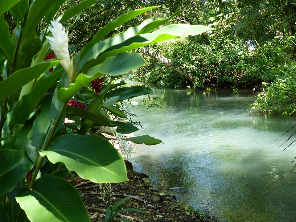River, Jamaica, Green, Plant, Frenchmans Cove
