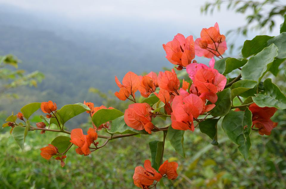 Flower, Red, Exotic, Plant, Landscape, Bloom, Blossom