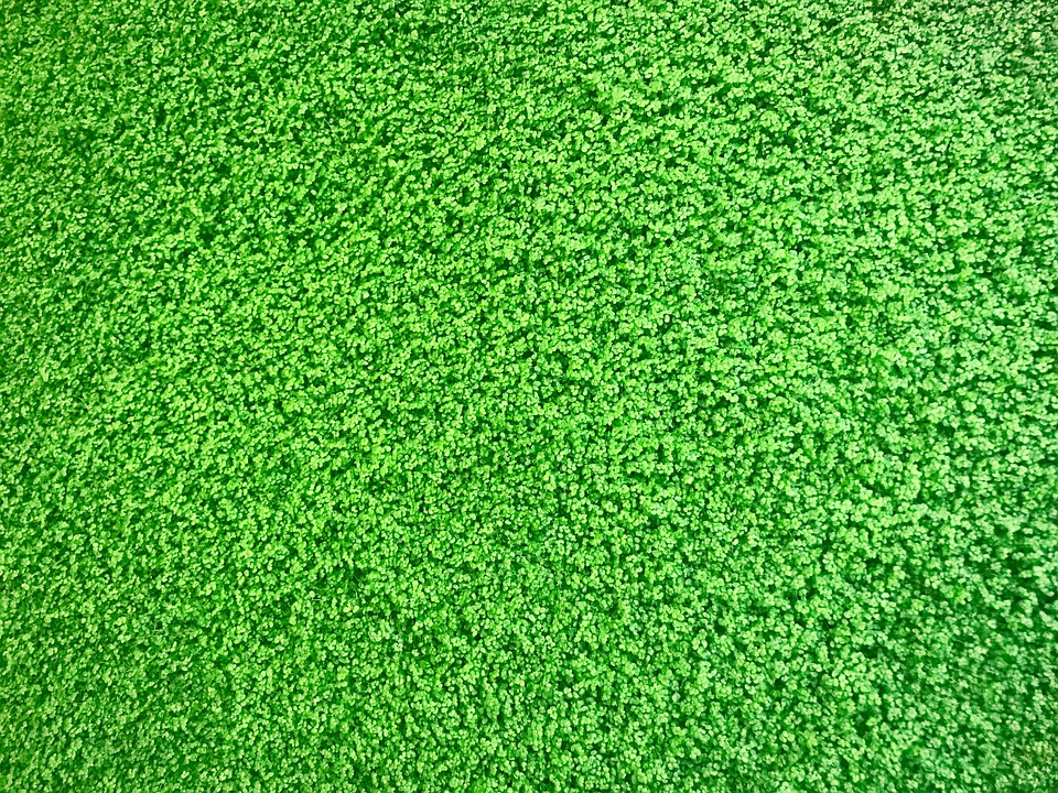 Lawn, Plant, Nature