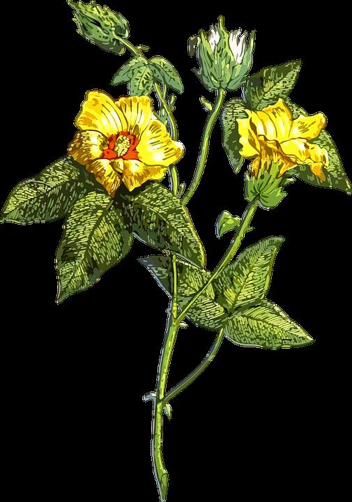 Flora, Floral, Flower, Leaf, Leafy, Leaves, Plant