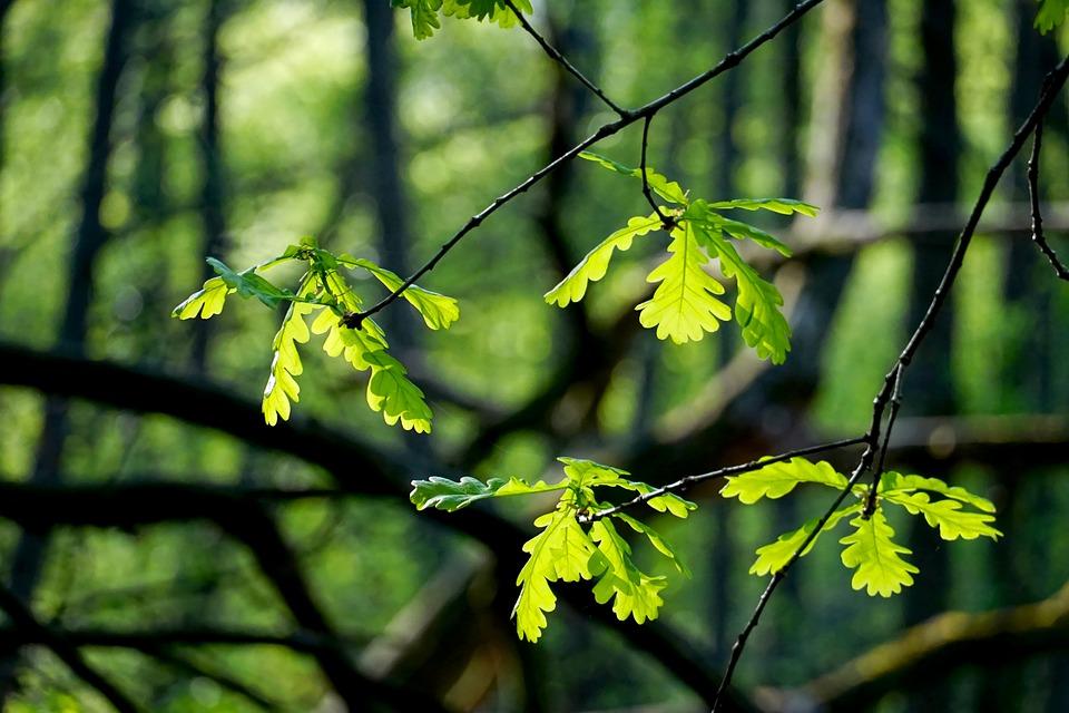 Leaf, Tree, Plant, Nature, Spring, Forest