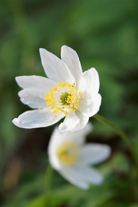 Flower, Nature, Plant, Leaf