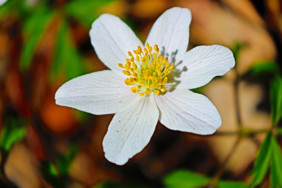 Nature, Flower, Plant, Leaf, Garden, Summer, Season