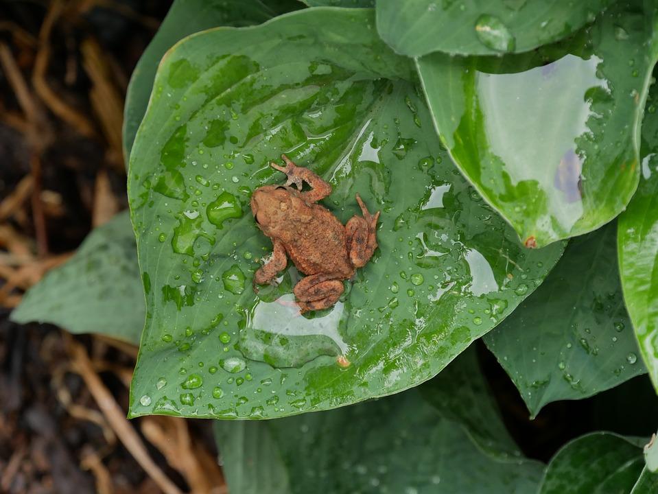 Leaf, Nature, Plant, Toad, Animal World, Animal