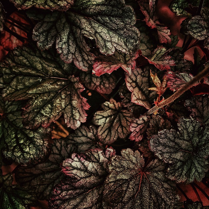 Plant, Flower, Leaves, Nature, Leaf, Blossom, Bloom