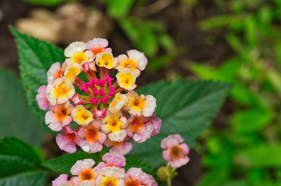 Flowers, Petals, Leaves, Foliage, Plant, Flowering