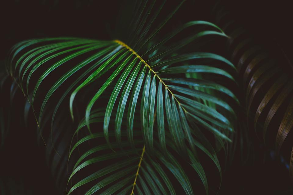 Frond, Green, Leaves, Nature, Plant
