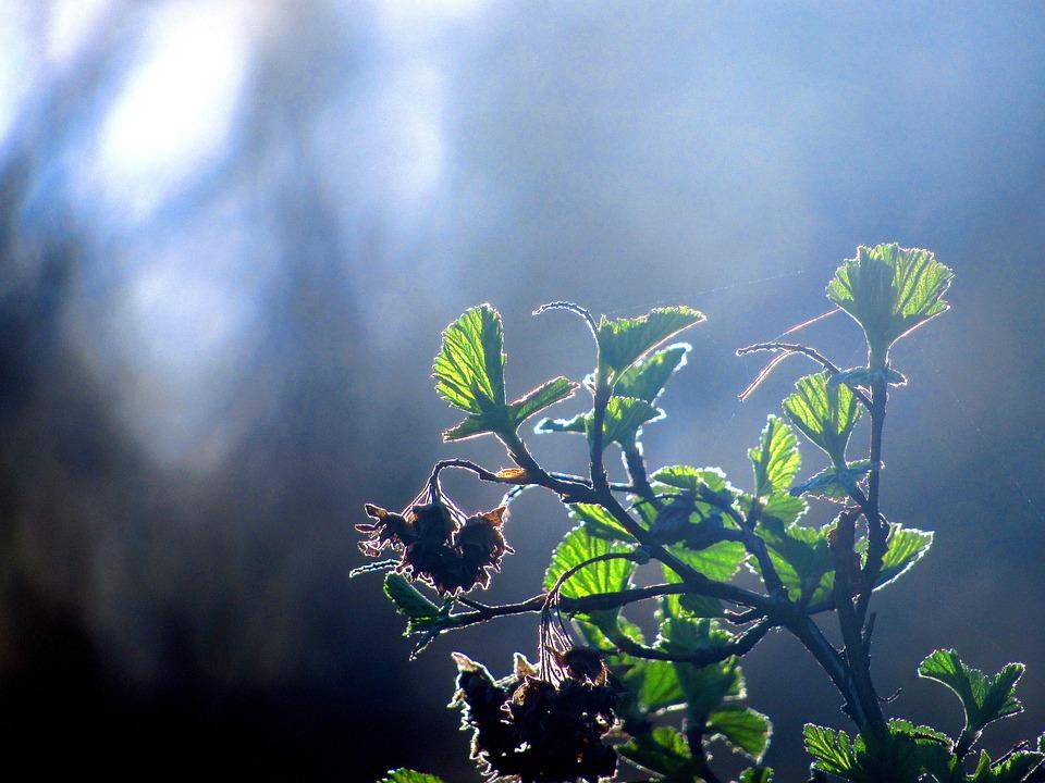 Plant, Leaf, Green, Nature, Natural, Summer, Leaves