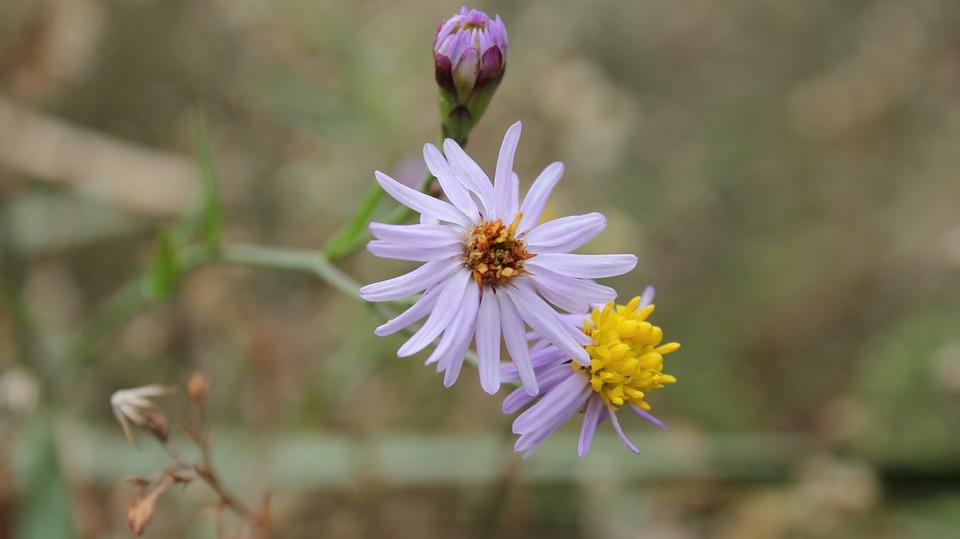Flower, Summer, Spring, Flora, Plant, Leaves, Macro