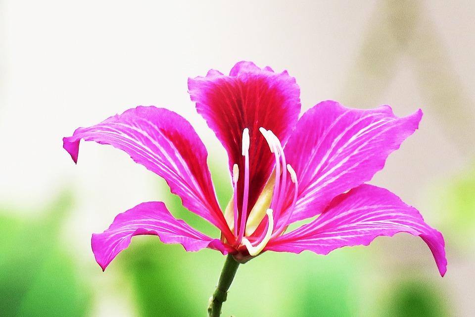 Nature, Flower, Plant, Summer, Leaf, Beautiful, Light