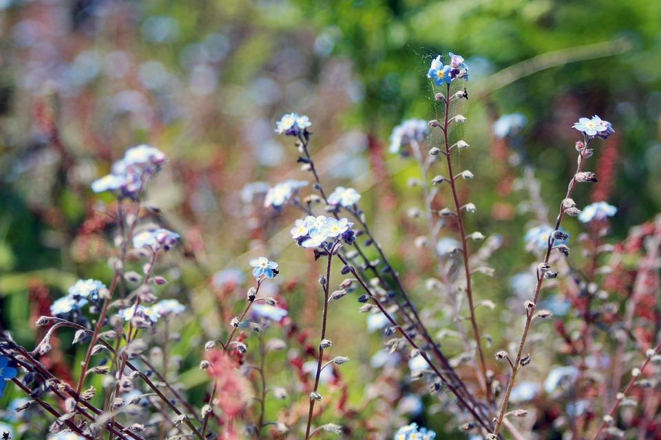 Bloom, Blossom, Flora, Flowers, Macro, Nature, Plant